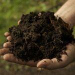 Bodemverbetering & compostwormen